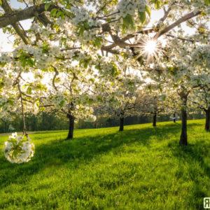 Blütenzauber im Baselbiet